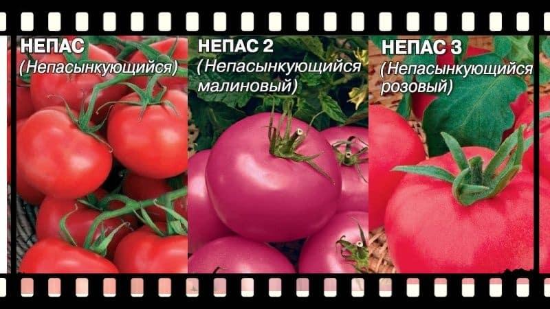 Что такое томат непас (непасынкующийся), чем он хорош, как его выращивают и какие сорта считаются самыми лучшими