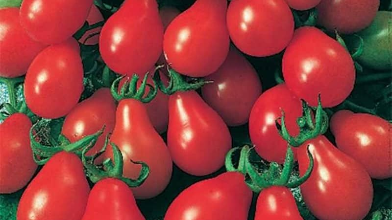 """Как вырастить самостоятельно на своем участке невероятно красивый и вкусный томат """"Матрешка"""""""