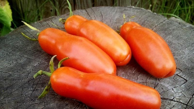 Томат Аурия (Мужское достоинство): характеристика и описание сорта, урожайность с фото