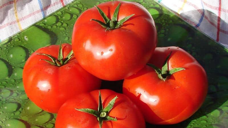 """Неприхотливый, универсальный в использовании, раннеспелый томат """"Дружок f1"""": отзывы и секреты выращивания"""