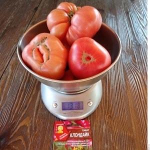 """Чемпион по содержанию бета-каротина: томат """"Клондайк"""", рекомендованный для диетического питания"""