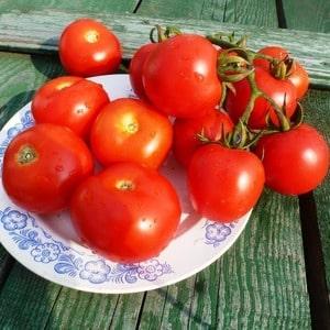 """Высокоурожайный гибридный томат """"Альгамбра"""", радующий крупными сочными плодами и устойчивый к заболеваниям"""