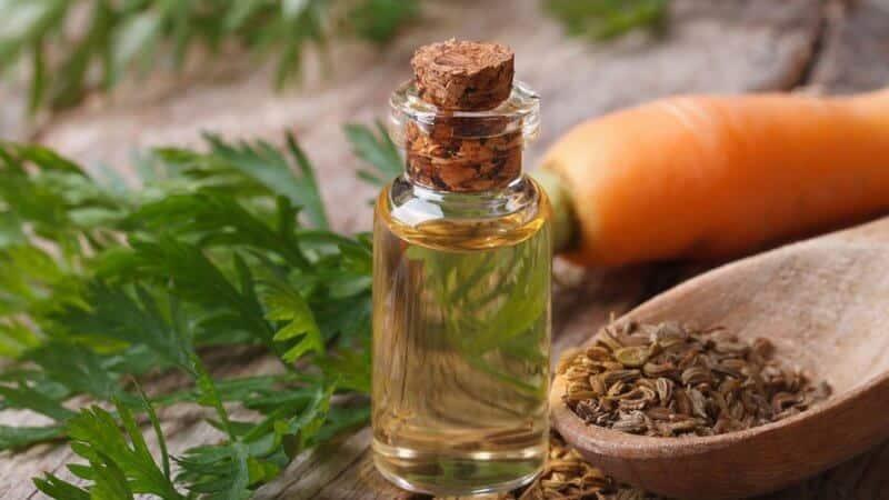 Чем полезны семена укропа для поджелудочной железы и как их правильно использовать