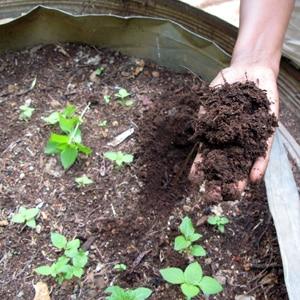 Как подготовить почву для помидоров в теплице для максимального плодоношения