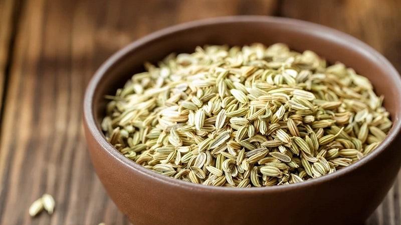 Как правильно заваривать и принимать семена укропа от кашля для детей и взрослых
