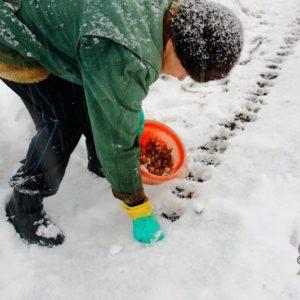 Пошаговая инструкция по посадке бульбочек чеснока под зиму: основные правила и секреты опытных огородников