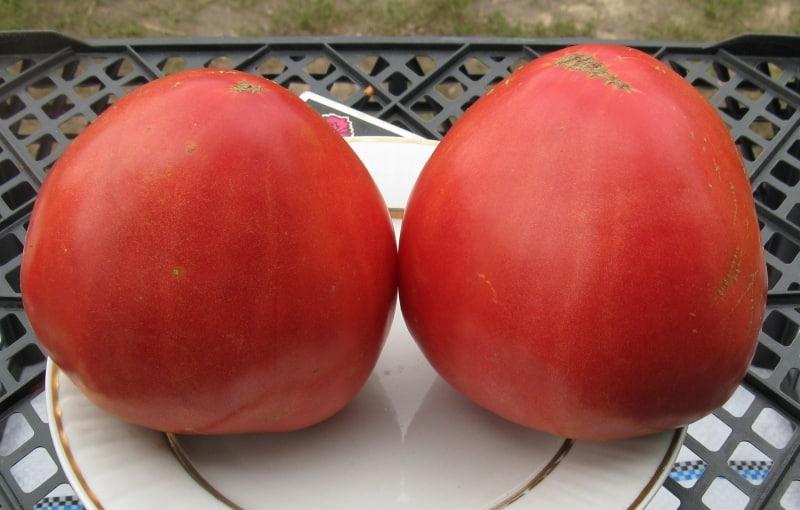 Особенности томатов {amp}quot;Алсу{amp}quot;: как вырастить их с умом, чтобы получить богатый и здоровый урожай
