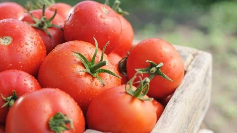 """Знакомимся с томатом """"Иришка F1"""" и пробуем вырастить его на своем участке"""