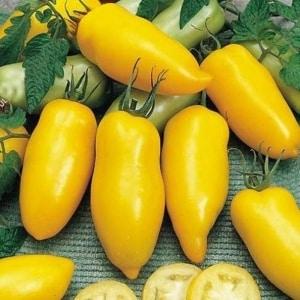 """Удивительный сорт для дачников-экспериментаторов - томат """"Банановые ноги"""" и рекомендации по его выращиванию"""