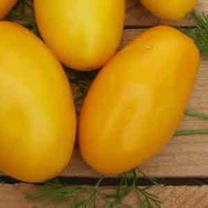 Раннеспелый сорт, идеальный для прохладного климата - томат {amp}quot;Буян{amp}quot; и инструкция по его выращиванию