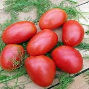"""Раннеспелый сорт, идеальный для прохладного климата - томат """"Буян"""" и инструкция по его выращиванию"""