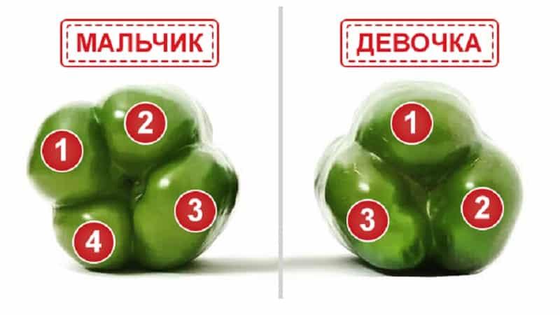 Где и как сохранить болгарский перец на зиму: в свежем, замороженном, сушеном, вяленом и консервированном виде
