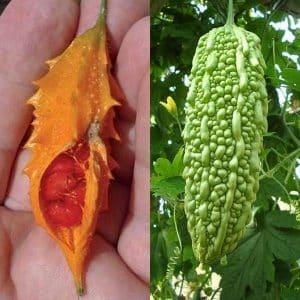 Что такое момордика харанция: обзор экзотического овоща, этапы его выращивания и лечебные свойства