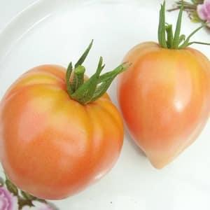 """Гигантские вкуснейшие оранжевые плоды – томат """"Клубника оранжевая"""""""