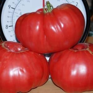 """Мясистые и сладкие плоды к вашему столу – томат """"Сахарный пудовичок"""": характеристика и описание сорта"""