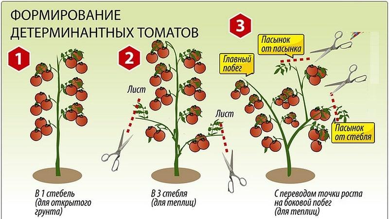 """Новый сорт, успевший покорить сердца дачников - томат """"Большая мамочка"""" и секреты выращивания крупных плодов"""