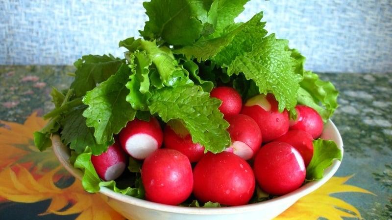 Какие витамины в редиске и чем она полезна для здоровья