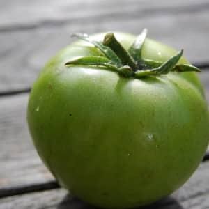 """Сказка на вашем участке - томат """"Царевна лягушка"""": отзывы и рекомендации по правильному выращиванию"""