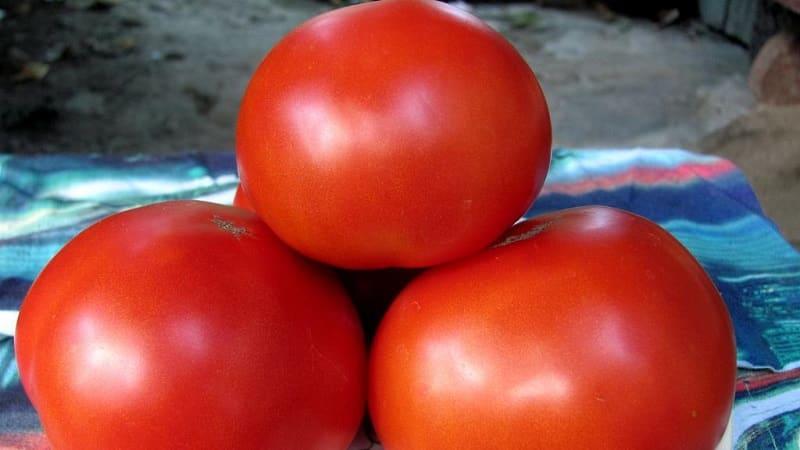 """Даст поздний урожай, но оправдает ожидания - томат """"Андреевский сюрприз"""""""