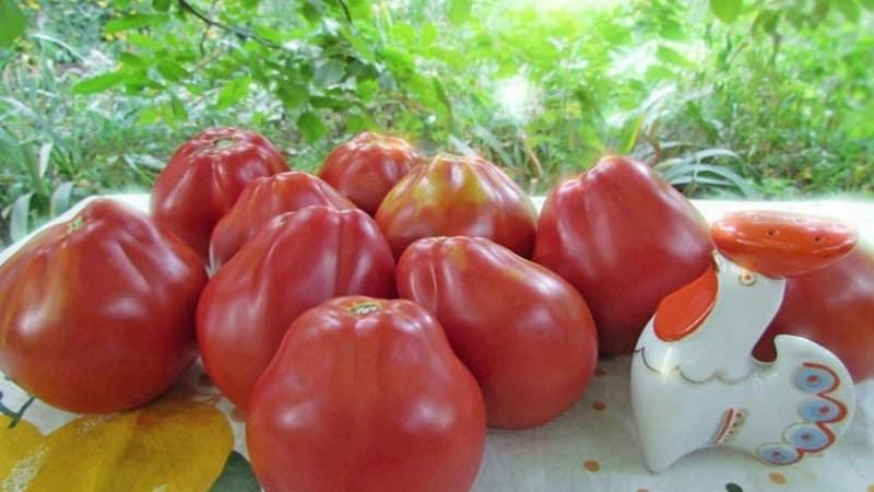 Томат Японский трюфель черный: отзывы об урожайности, фото помидоров, характеристика и описание сорта
