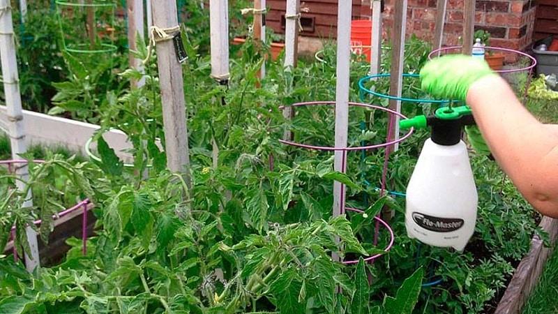 Как и чем подкормить помидоры в период цветения и завязывания плодов для получения богатого урожая крупных томатов