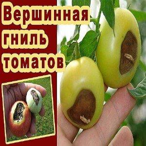 Бюджетное средство, которым огородники со стажем лечат томаты: кальциевая селитра от вершинной гнили