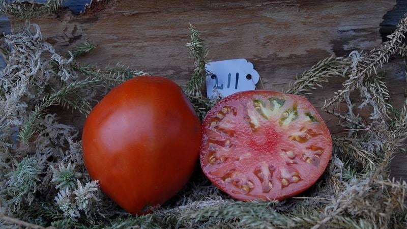 """Мясистый и очень вкусный томат """"Мишка косолапый"""": отзывы и агротехнические приемы для повышения урожая"""