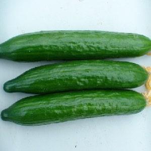 """Очень вкусные и урожайные огурцы """"Стелла"""": знакомимся с сортом и пробуем вырастить сами"""