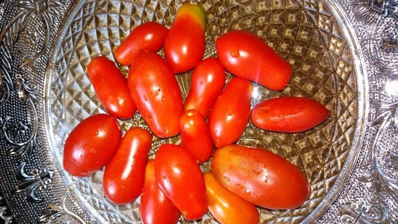 """Почему огородникам так нравится томат """"Деликатес"""" и как его вырастить на своем участке, получив обильный урожай"""