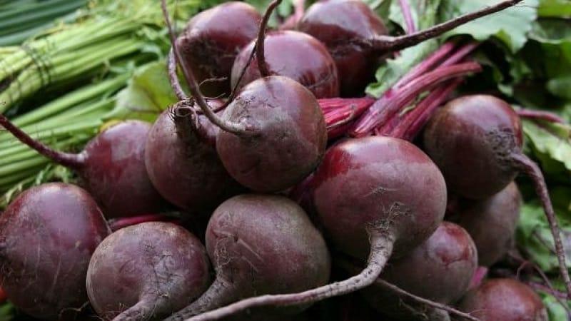 Польза и вред свеклы для организма человека: как, сколько и в каком виде лучше есть овощ