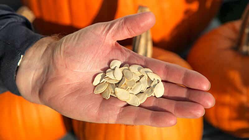 Польза и вред тыквенных семечек для женщин: лечебный эффект и правила применения семян тыквы