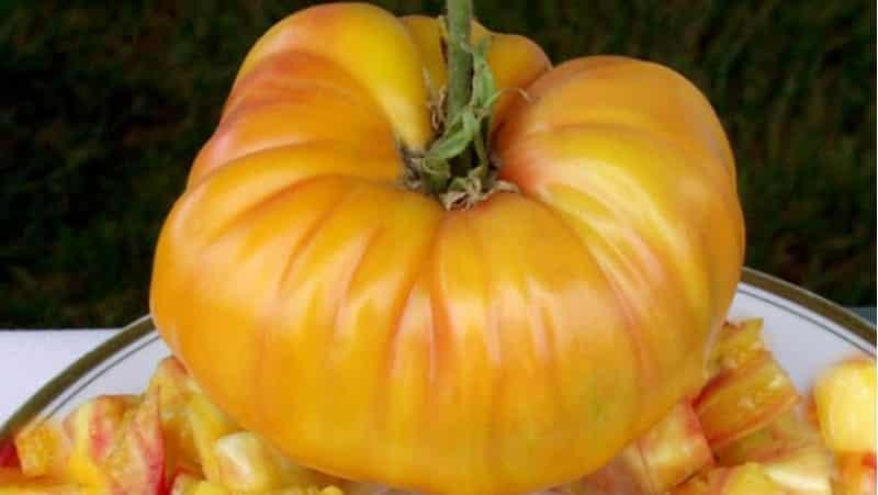 Сорт, который станет вашим любимчиком - томат Грейпфрут: крупный, неприхотливый в уходе и потрясающе вкусный