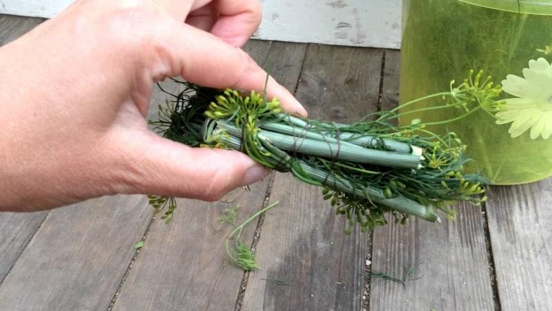 Способы применения стеблей укропа с максимальной пользой