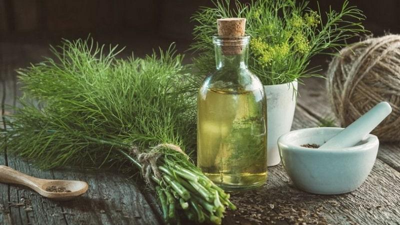 Узнаем, как сделать укропное масло в домашних условиях: инструкция по приготовлению и правила применения масла из укропа