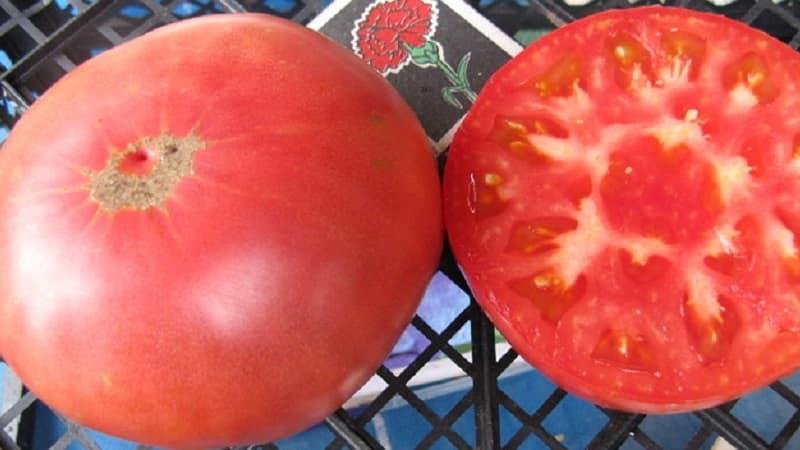 """Выращиваем томат """"Царский подарок"""" поэтапно, начиная с рассады и заканчивая сбором обильного урожая"""