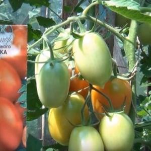 Как ухаживать за гибридным томатом «Паленка» для лучшего урожая