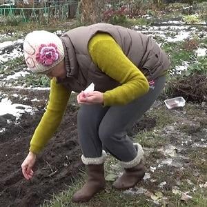 Как правильно производится посадка свеклы в зиму: пошаговая инструкция и важные нюансы