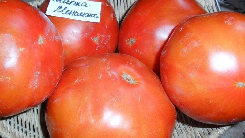 "Сорт помидоров, который точно вас не разочарует - томат ""Шапка Мономаха"""