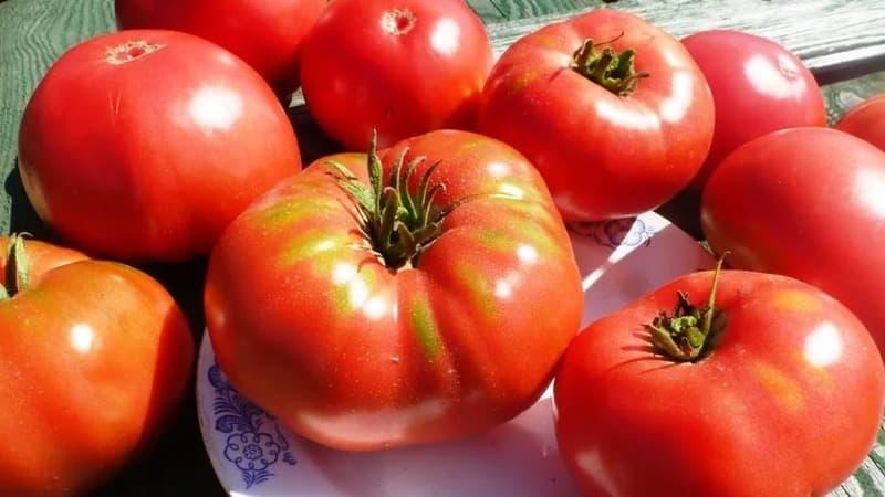 """Стойкий сорт для суровых погодных условий - знаменитый томат """"Гордость Сибири"""""""