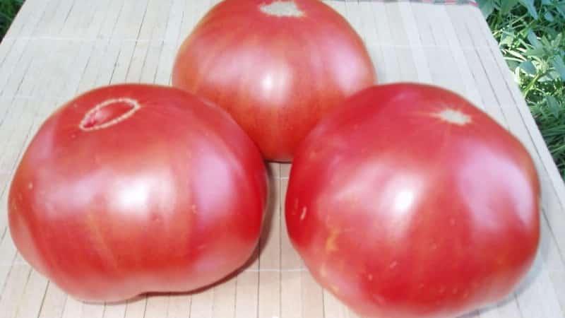 Томат Исполин (черный и малиновый): характеристика и описание крупноплодного сорта с фото