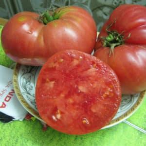 Выращиваем томат Исполин на своем участке: секреты посадки и советы по уходу