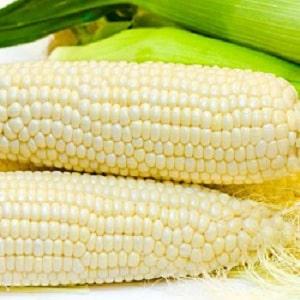 Сахарная кукуруза: выбираем лучший сорт и правильно выращиваем десертную разновидность
