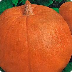"""Сорт тыквы """"Дынная"""", обожаемый огородниками за сладкий вкус и необычайный аромат"""