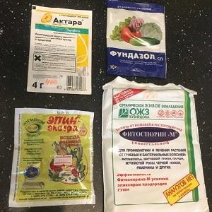 Причины и лечение антракноза огурцов: самые эффективные методы борьбы за здоровье урожая