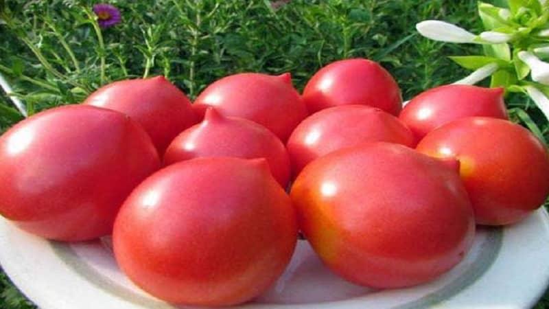"""Украшение грядки с необычным цветением - томат """"Японская роза"""" и его преимущества перед другими сортами"""