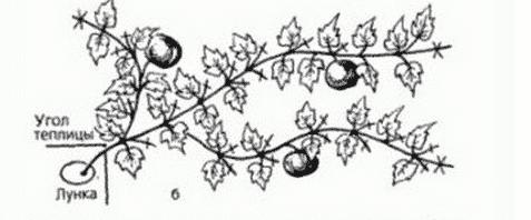 Как правильно прищипывать тыкву в открытом грунте, чтобы получить хороший урожай