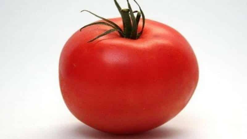 """Стойкий гибрид от японских селекционеров - томат """"Мишель f1"""": выращиваем самостоятельно без хлопот"""