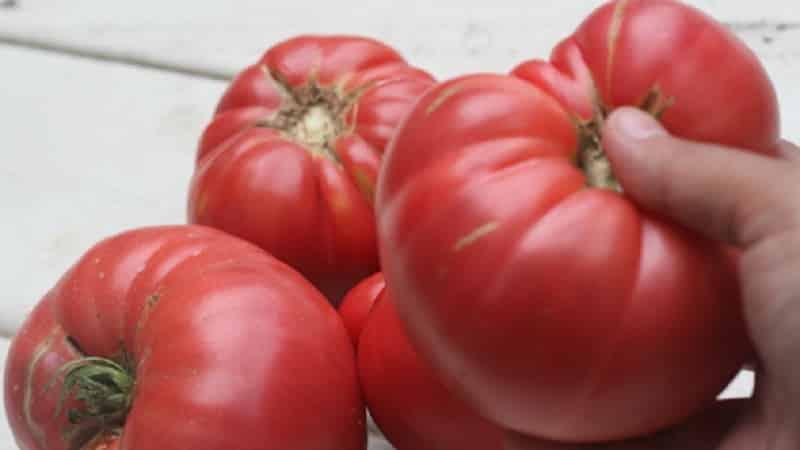 """Чем так хорош томат """"Биф пинк бренди f1"""" и почему дачники его так любят: обзор сорта и секреты его выращивания"""