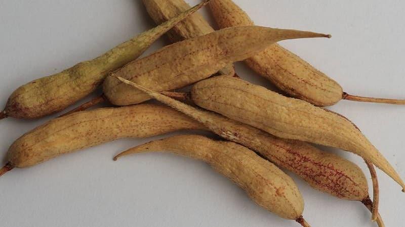 Как собрать семена редиса в домашних условиях: пошаговая инструкция и полезные советы