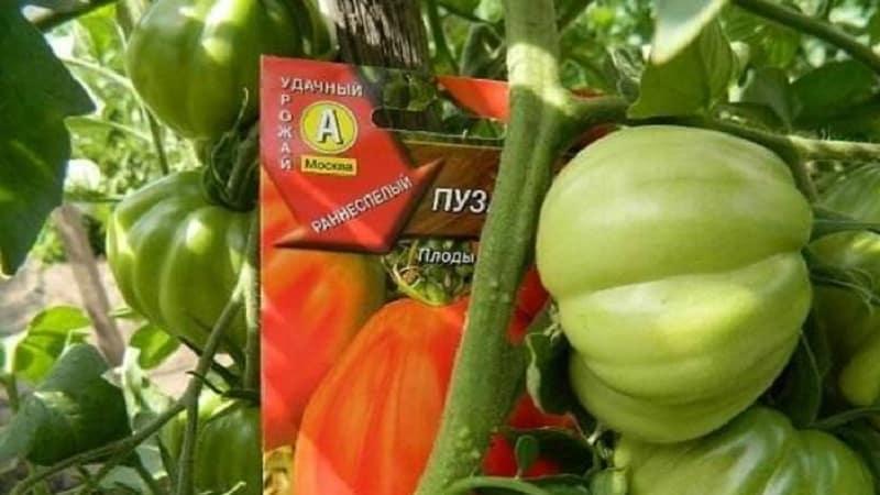 """Стоит ли пробовать вырастить томат """"Пузата хата"""" и чем он может приглянуться новичкам и опытным фермерам"""